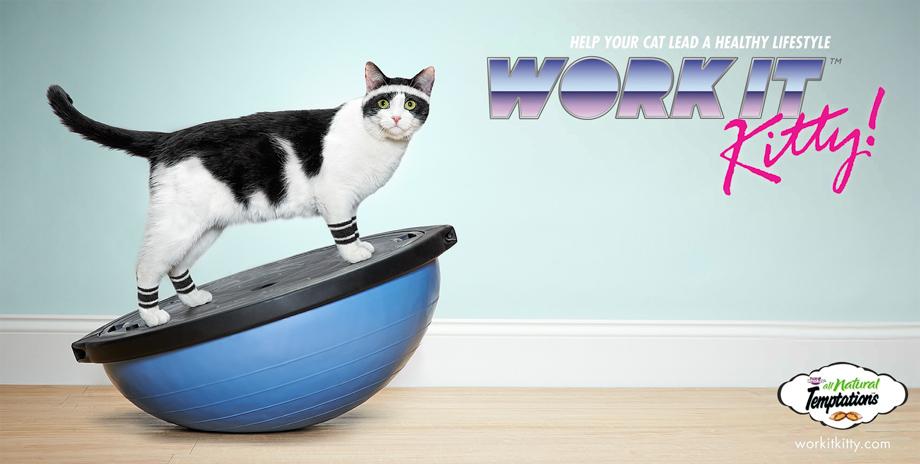 Work It Kitty © Ross Feighery / Temptations